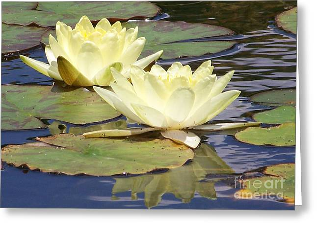Lilly Pad Greeting Cards - Yellow Water Lillies Greeting Card by Carolyn Baumgart