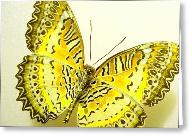 Morph Greeting Cards - Yellow Wings in Gold Greeting Card by Rosalie Scanlon