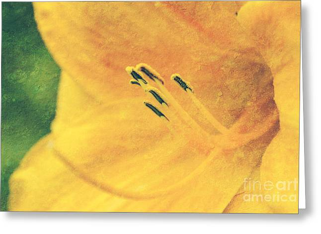 Aimelle Photographs Greeting Cards - Yellows - textured Greeting Card by Aimelle
