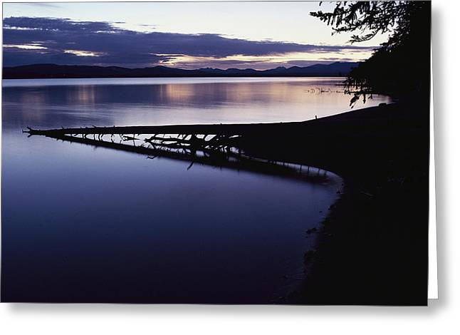 Plant Growth And Decay Greeting Cards - Yellowstone Lake At Dawn, Yellowstone Greeting Card by Raymond Gehman