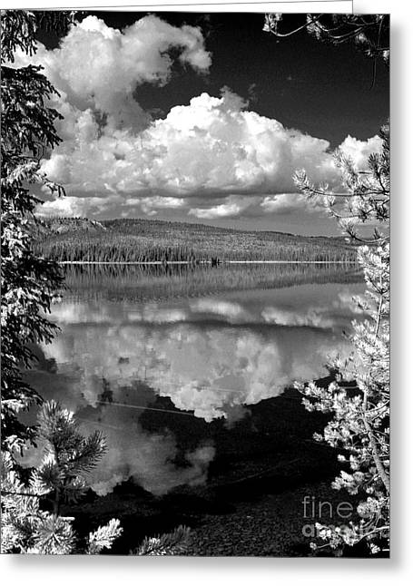 Black Berries Greeting Cards - Yellowstone Lake Greeting Card by Diane E Berry
