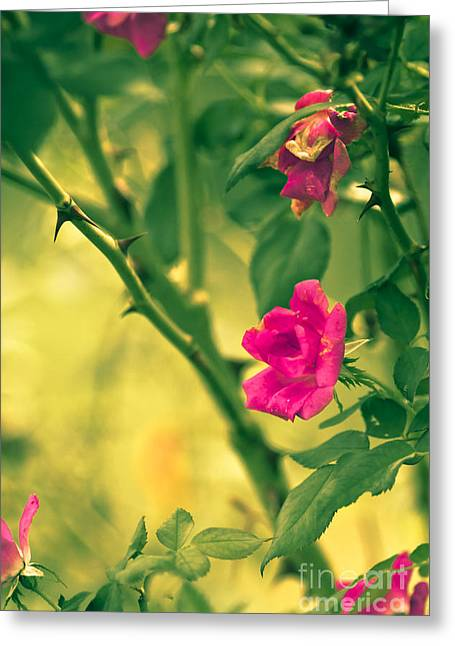 Yesterday In The Garden Greeting Card by Kim Henderson