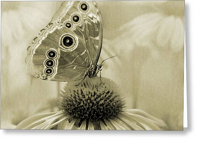 Nature Pyrography Greeting Cards - Yesterdays Visitor Greeting Card by Melisa Meyers