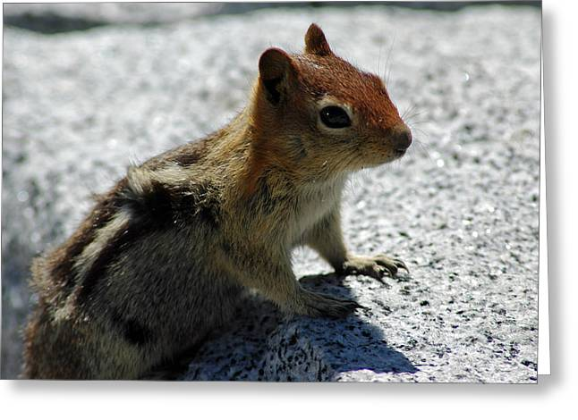 Chipper Greeting Cards - Yosemite chipmunk Greeting Card by LeeAnn McLaneGoetz McLaneGoetzStudioLLCcom