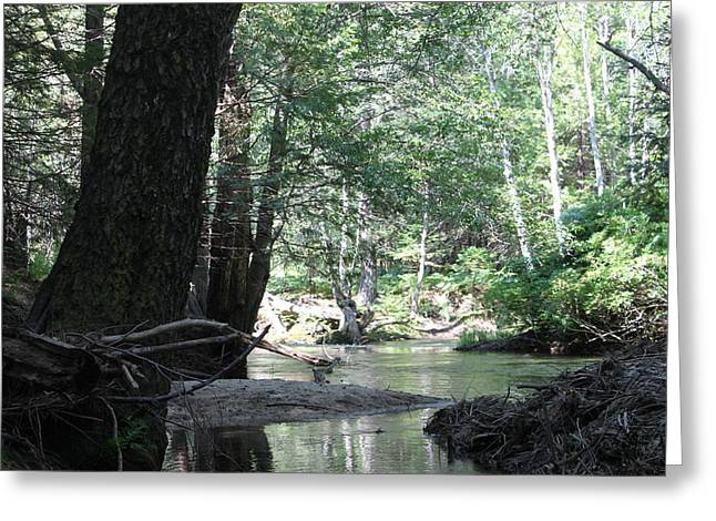 Yosemite Creek Greeting Card by Remegio Onia