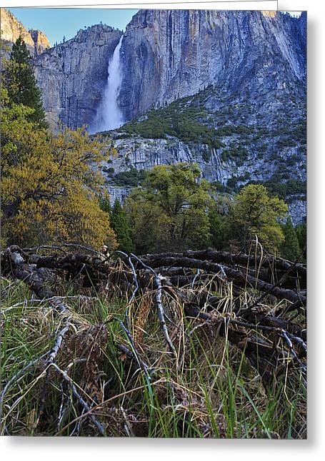 Yosemite Creek Greeting Cards - Yosemite Falls from the Valley Floor Greeting Card by Rick Berk