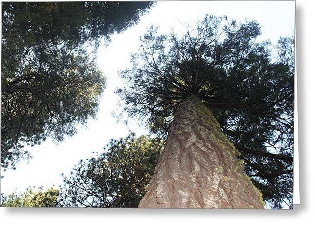 Yosemite Skyline Greeting Card by REMEGIO ONIA
