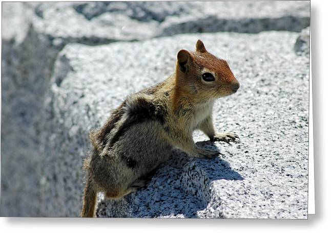 Chipper Greeting Cards - Yosemite timber tiger aka chipmunk Greeting Card by LeeAnn McLaneGoetz McLaneGoetzStudioLLCcom