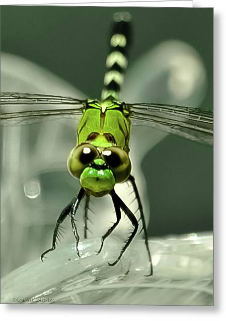 Olive Green Greeting Cards - You Looking at Me Looking at You Greeting Card by DigiArt Diaries by Vicky B Fuller