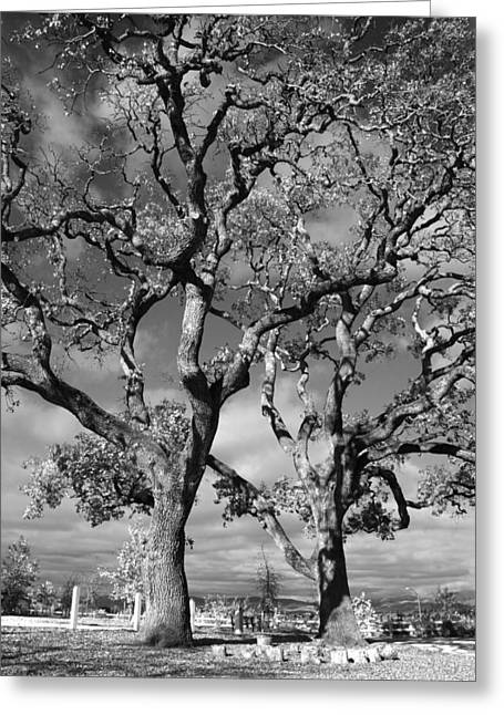 Oak Tree Greeting Cards - You Never Let Me Down Greeting Card by Laurie Search