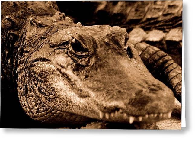 Florida Gators Greeting Cards - You Talkin To Me Greeting Card by Lisa Scott
