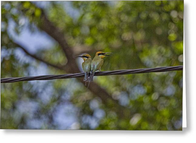 Top-end Greeting Cards - You Watch My Back And I Will Watch Yours Greeting Card by Douglas Barnard