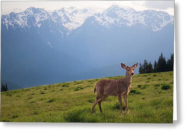 Pea Ridge Greeting Cards - Young Buck and Mt. Olympus Peaks at Hurricane Ridge Greeting Card by Stacey Lynn Payne