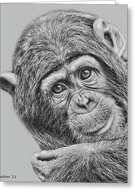 Chimpanzee Digital Greeting Cards - Young Chimp 5 Greeting Card by Larry Linton