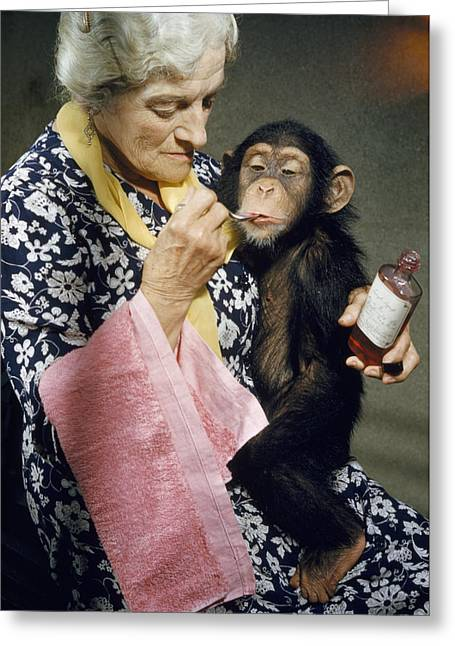 Young Chimpanzee Sips Medicine Greeting Card by B. A. Stewart And David S. Boyer