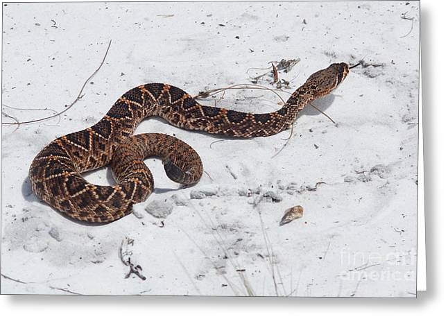 Snake Flag Greeting Cards - Young Diamondback Greeting Card by Lynda Dawson-Youngclaus