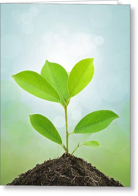 Young Green Plant. Greeting Card by Kittisak Taramas