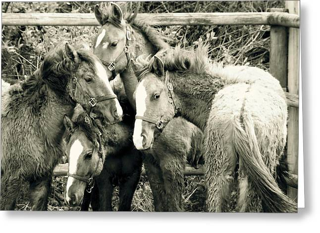 Wild Horse Pyrography Greeting Cards - Young Mustangs Greeting Card by Tess  Marie
