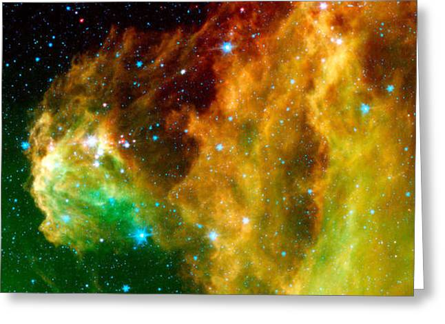 Super Stars Greeting Cards - Young Stars Emerge From Orions Head Greeting Card by Nasa