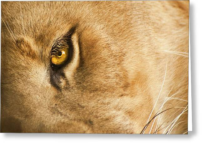Lioness Greeting Cards - Your Lion Eye Greeting Card by Carolyn Marshall