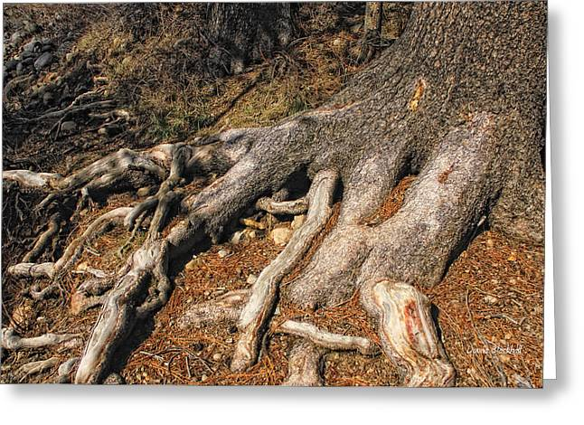 Tree Roots Greeting Cards - Your Roots Are Showing Greeting Card by Donna Blackhall