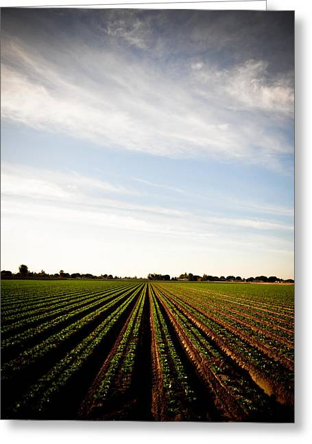 Lettuce Greeting Cards - Yuma Fields  Greeting Card by Scott Sawyer