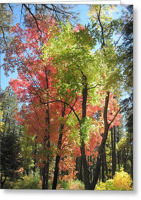 Oak Creek Canyon Greeting Cards - Yummy Fall Colors Greeting Card by Sandy Tracey