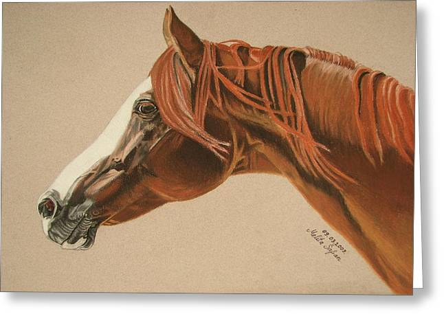 Horse Images Pastels Greeting Cards - Zarro Greeting Card by Melita Safran