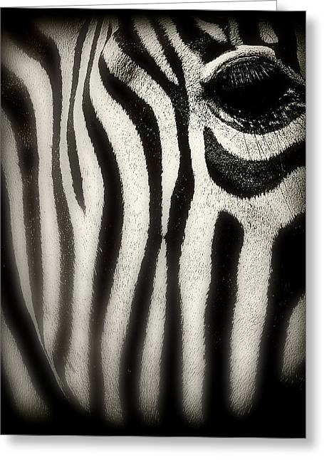 Zebra Pictures Greeting Cards - Zebra Greeting Card by Perry Webster