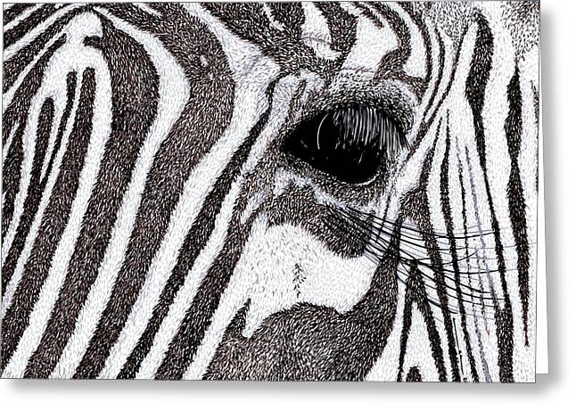 Ink Drawing Greeting Cards - Zebra Portrait Greeting Card by Karl Addison