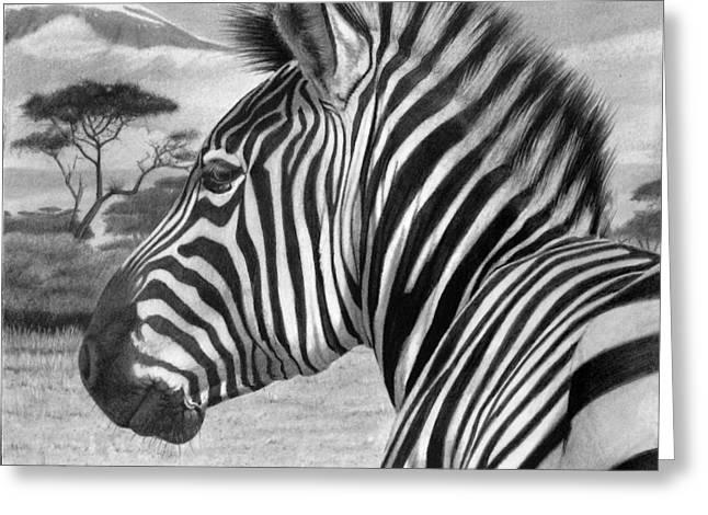 Africa Drawings Greeting Cards - Zebra Greeting Card by Tim Dangaran