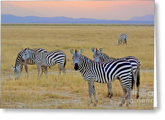Zebras In The Morning Greeting Card by Pravine Chester