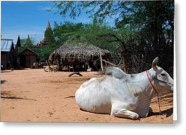 Bagan Greeting Cards - Zebu between pagodas Greeting Card by RicardMN Photography