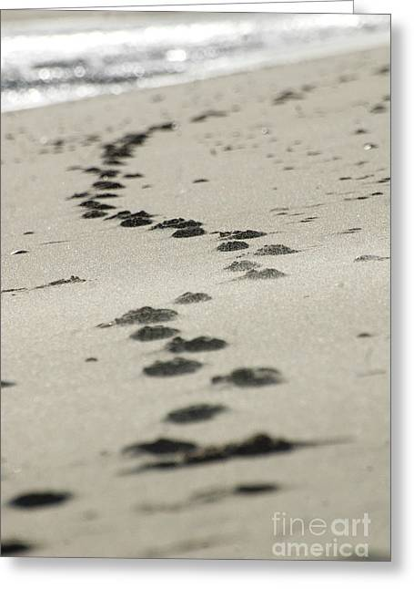 Hamptons Digital Art Greeting Cards - Zen footsteps on the snad Greeting Card by AdSpice Studios