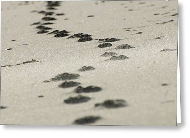 Zen footsteps on the snad Greeting Card by AdSpice Studios