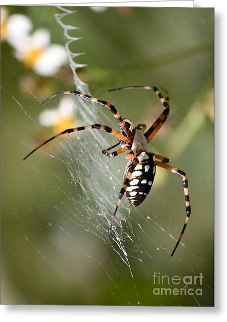 Zipper Greeting Cards - Zipper Spider in the Swamp Greeting Card by Carol Groenen