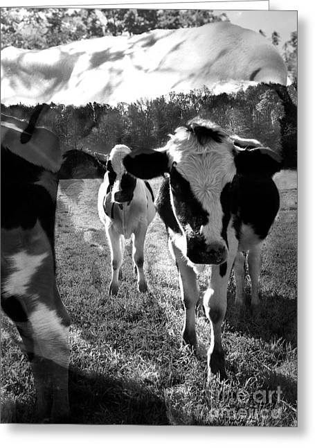 Zoey And Matilda In The Blissful Sun Greeting Card by Danielle Summa