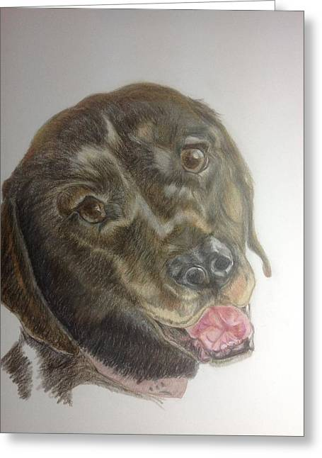 Chocolate Lab Greeting Cards -  A new puppy arrives Greeting Card by Deborah Ryckman