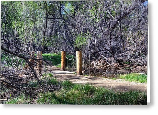 Watson Lake Greeting Cards -  A path Through Nature Greeting Card by Thomas  Todd