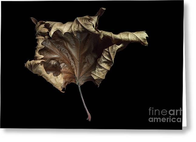 Autumn Leaf Greeting Card by Ann Garrett