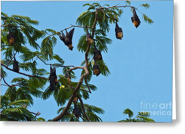 Flying Animal Greeting Cards -  Bats hanging in the trees Greeting Card by Beth Wolff