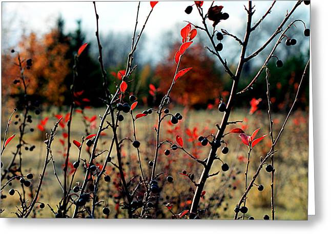 Berry Greeting Cards -  Black and red Greeting Card by Ekaterina Torganskaia