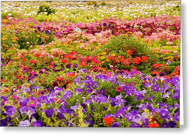 Blooming Colorful Garden  Greeting Card by Art Spectrum