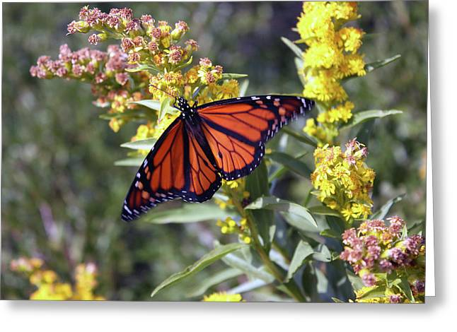 Yellow Flowers Framed Prints Greeting Cards -  Butterfly Greeting Card by Mark Ashkenazi