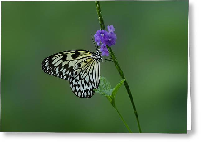Butterfly on Flower  Greeting Card by Sandy Keeton