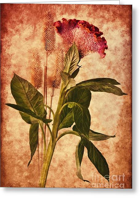 Celosia Greeting Card by Angela Doelling AD DESIGN Photo and PhotoArt