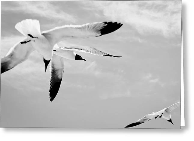 Flying Seagull Greeting Cards -  Chaos - Seagulls Black and White Greeting Card by Colleen Kammerer