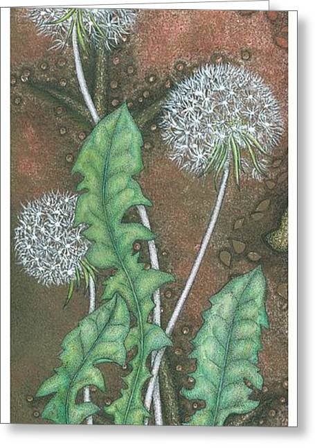 Floral Still Life Drawings Greeting Cards -  Dandelion Greeting Card by Sandra Moore