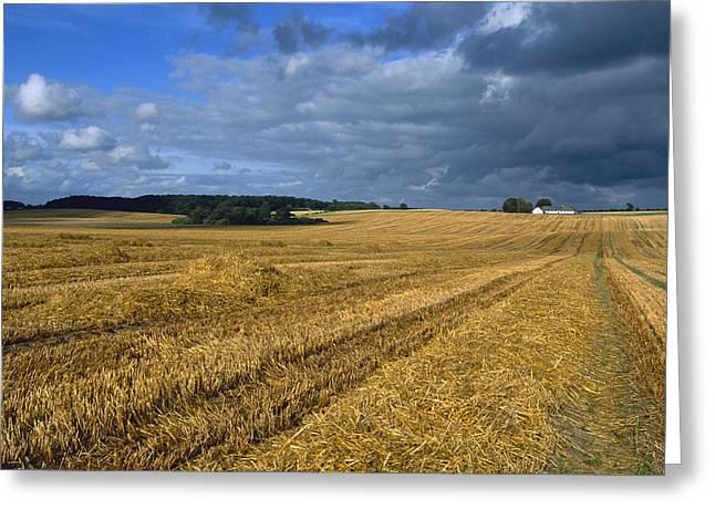 Jutland Greeting Cards -  Denmark, Vorbasse Wheat Fields Greeting Card by Keenpress