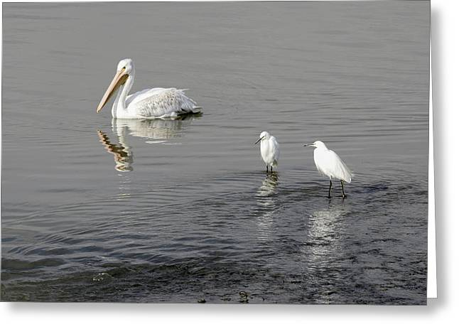 Pairs Greeting Cards -  Egrets -  I have a few Greeting Card by Rae Ann  M Garrett